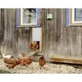 Automatische Hühnertür Komplett-Set mit Schieber