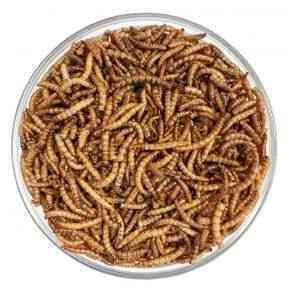 Mehlwürmer getrocknet im Sack